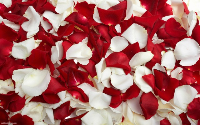 Red-White-Rose-Petals-640x400