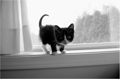 adorable-black-and-white-cats-cute-cuteness-Favim.com-401879